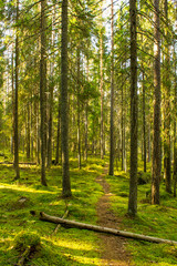 Virgin forest in the Southern Finland