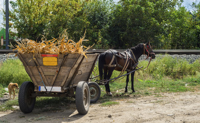 Wooden carriage with crop