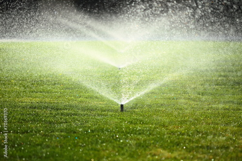 Foto op Canvas Tuin garden sprinkler on the green lawn