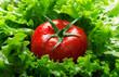 Pomodoro e insalata