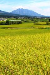 秋の南阿蘇村 根子岳がみえる風景