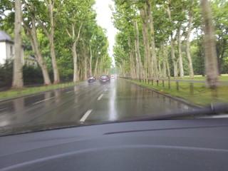 Regen - Nasse Straße zwischen vielen Bäumen