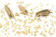 金ゴマの鞘と実