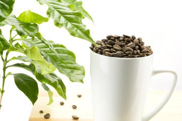 カップの中のコーヒー豆とコーヒーの木の葉