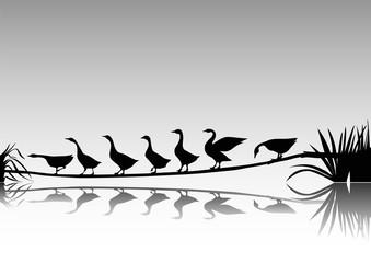 Kazlar  ( siyah-beyaz )
