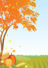 Thanksgiving background	with Maple  tree and pumpkins