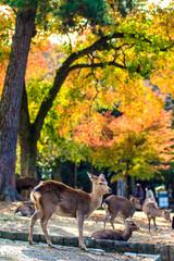 Deer near Todaiji temple in Nara, Japan