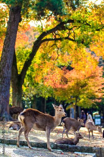 Foto op Aluminium Beijing Deer near Todaiji temple in Nara, Japan
