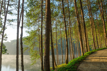 Pine forests and lakes in the morning at Pang Ung,Thailand