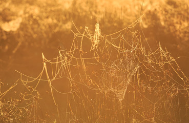 Spiderwebs in a meadow during a foggy sunrise.