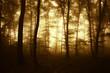 sunrise in autumn forest