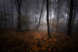 dark misty forest at night with colorful leaves
