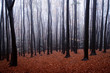colorful misty forest with red leaves on the ground