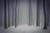 Fototapety dark foggy forest in winter