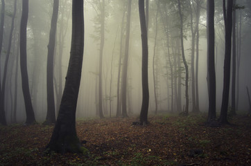foggy forest after rain