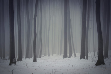 dark foggy forest in winter