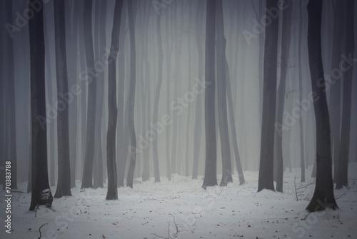 dark foggy forest in winter