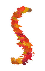 letter S from bright autumn leaves