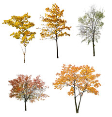 set of five autumn trees isolated on white