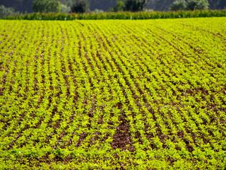 Agrarlandschaft