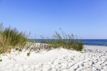 Beach access between the dunes