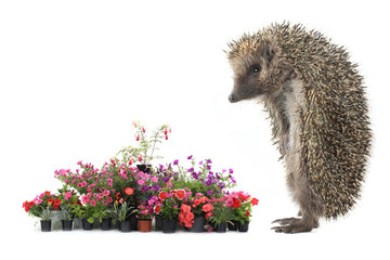 colorful flover and  hedgehog