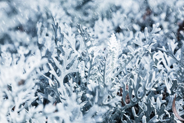 Nature in winter. Frozen plants during snow blizzard.