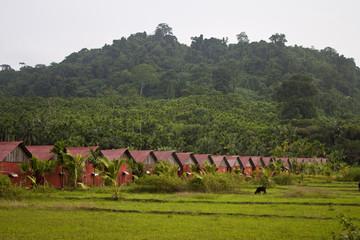 Huts at tropical island . Havelock, Andaman islands, India.