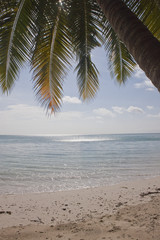 Tropical paradise beach, Beach No.5, Havelock, India