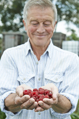 Senior Man On Allotment Holding Freshly Picked Raspberries