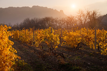 Landscape with a vineyard.