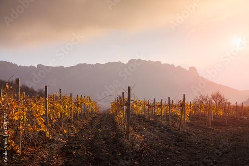 Papiers peints Culture Landscape with a vineyard.