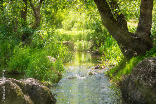 Stream in the tropical forest - 70394942