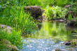 Stream in the tropical forest - 70395351
