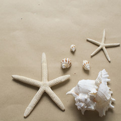 Starfishes and seashells on brown paper can use to be frame