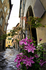 Narrow streets and flowers, cityscape of Lucca, Tuscany
