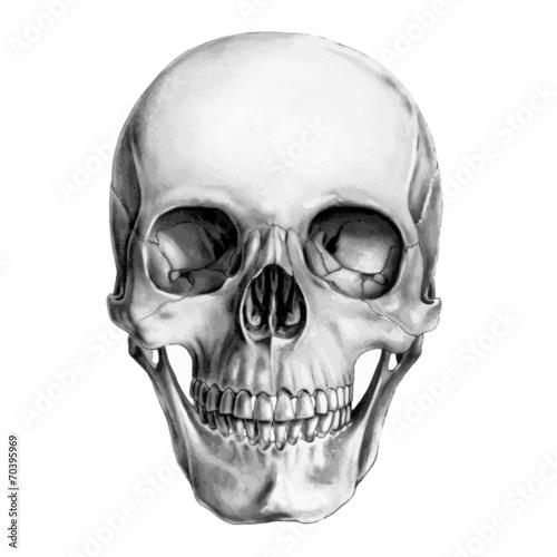 Zdjęcia na płótnie, fototapety, obrazy : Human Skull
