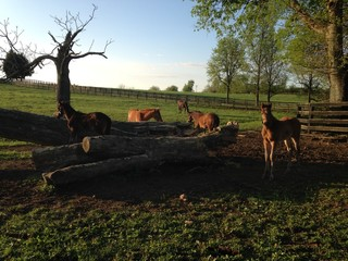 Curious Foals