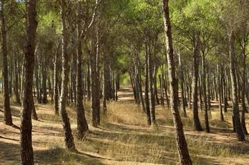 Puerta en el bosque
