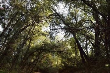 Bosque cerrado