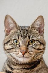Passbild Katze
