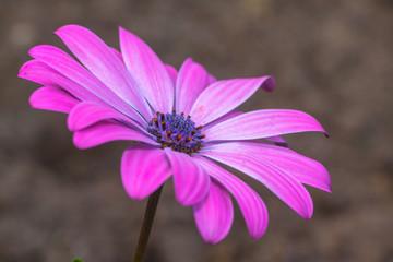 Kwiat - Flower
