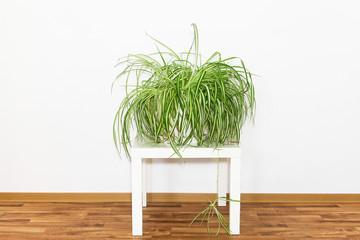 Pflanzenpflege
