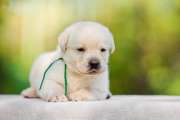 small puppy outdoors