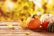 Fresh pumpkin and squash in an autumn garden