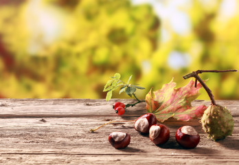 Chestnuts and rose hips in an autumn garden