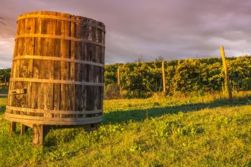 Botte di vino con vigneto
