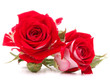 Obrazy na płótnie, fototapety, zdjęcia, fotoobrazy drukowane : Red rose flower bouquet isolated on white background cutout