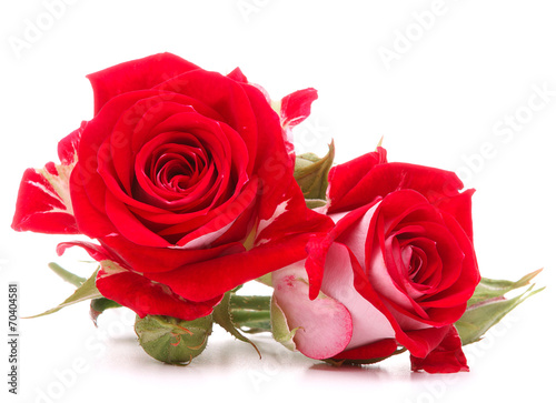 canvas print picture Red rose flower bouquet isolated on white background cutout