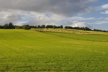 Farmland in Scotland